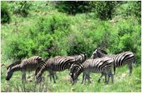 南非动物保护区