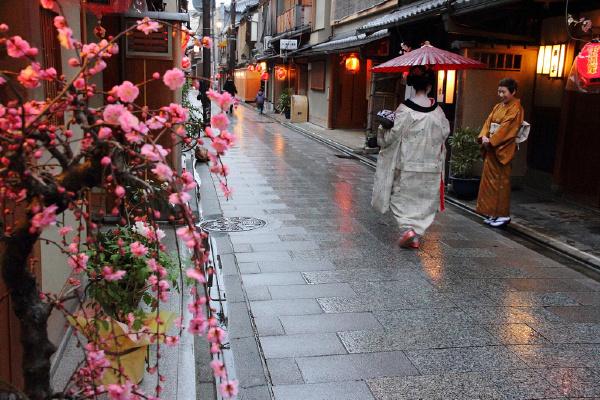 长春到日本看樱花,日本七日游