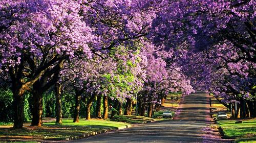 长春到南非旅游团南非克鲁格花园大道11日游